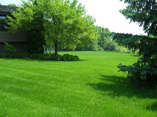 lawn-care-2